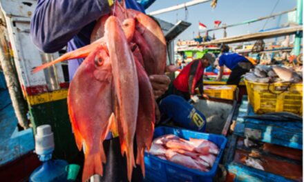 New fishery improvement projects in Indonesia cover tuna, snapper, and grouper
