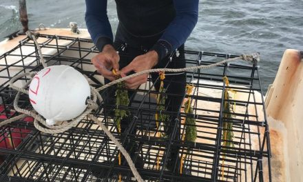 NETUNO partners with Two Docks Shellfish farm to research seaweed production in South Florida