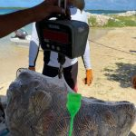 NETUNO LAUNCHES new Venezuelan Lobster FIP TO START THE SEASON